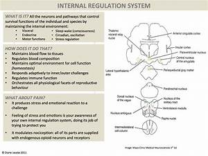 Humanantigravitysuit  Dermoneuromodulation  Ascending Pathways