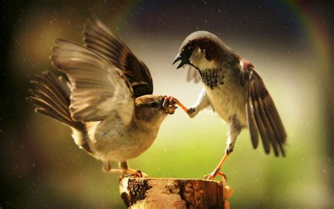 Animals And Birds Wallpaper - birds animals sparrows rainbows humor wallpapers