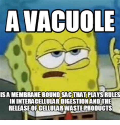 Picture Of Memes - a vacuole isamembranebound sacthat plays rules ininteracellulardigestionandthe release of