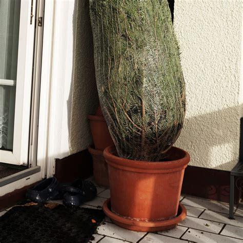 Weihnachtsbaum Länger Frisch by Tipps Damit Der Weihnachtsbaum L 228 Nger Frisch Bleibt