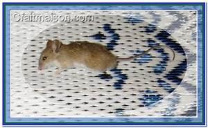 Produit Pour Tuer Les Rats : produit contre les rats et souris taupier sur la france ~ Voncanada.com Idées de Décoration