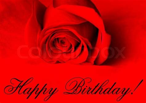 happy birthday red rose  red background stock photo