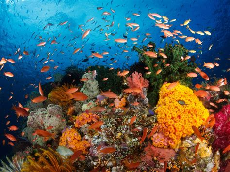 hd wallpapers ocean coral reefs  corals exotic