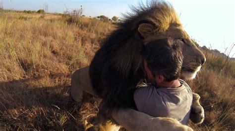 este hombre intenta abrazar   leon salvaje  podras