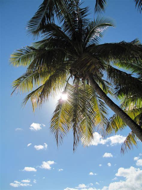tropical sun   palm tree  image