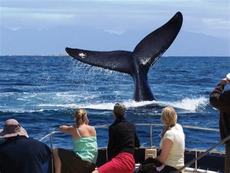Aqua Action In Cape Winter Waters