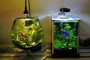 betta fish tank setup ideas that a statement spiffy pet products