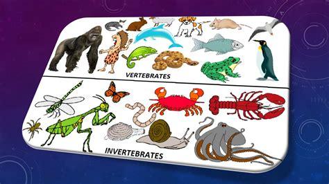 10 Perbedaan antara invertebrata dan vertebrata ...