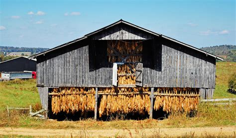 Old Tobacco Barn Stock Photo. Image Of Trail, Country