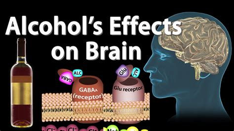 effects  alcohol   brain animation professional