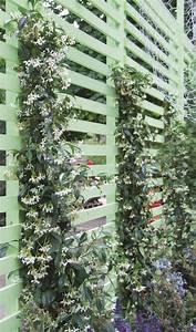 Treillage Plante Grimpante : des grimpantes au jardin laissez place au vert treillage jardin jardins et plante grimpante ~ Dode.kayakingforconservation.com Idées de Décoration