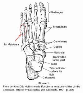 Anatomy Coloring Pages Bones