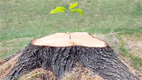 Best Options For Removing Tree Stumps From Your Lawn