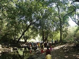 TripAdvisor - Kanheri Cave 1 - صورة Sanjay Gandhi ...