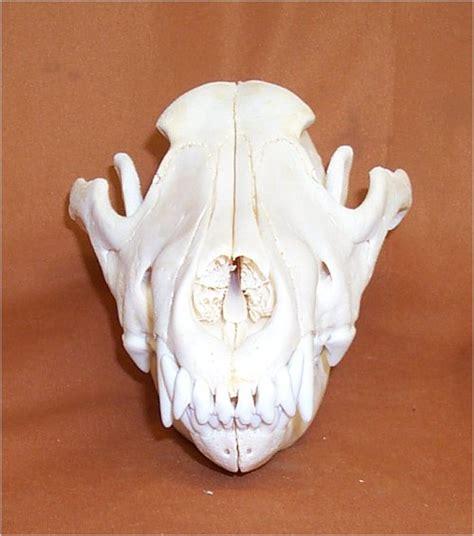 wolf skulls  sale  wwwhideandfurcom