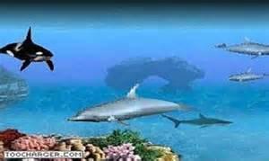 crawler 3d marine aquarium screensaver t 233 l 233 charger gratuitement la derni 232 re version