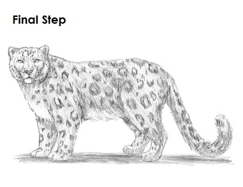 draw  snow leopard
