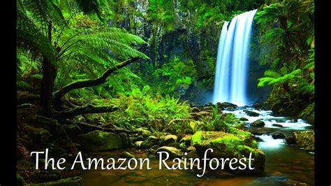amazon rainforest facts hd youtube
