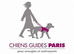 France Afrique Du Sud Quelle Chaine : france afrique du sud coup d envoi fictif de l ecole de chiens guides de paris ffr ~ Medecine-chirurgie-esthetiques.com Avis de Voitures