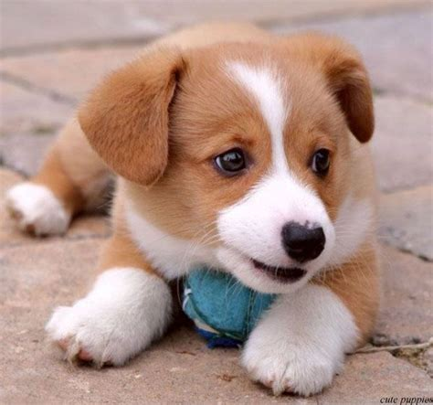 8 Best Images About Cute Dogs On Pinterest Too Cute