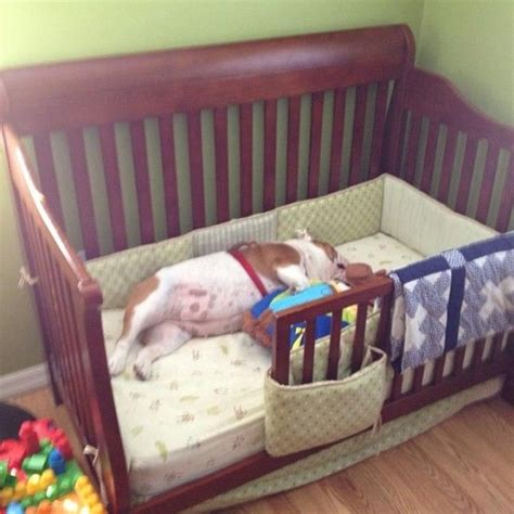 ethan krause   turn charlies crib   dog bed