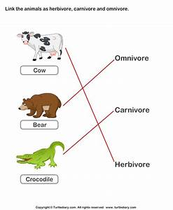 Herbivores Carnivores and Omnivores Animals Worksheet ...