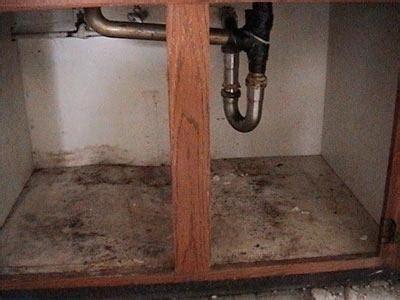steps    mold contamination   home
