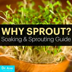 Sprouted Pumpkin Seeds Vs Unsprouted sprout guide how to sprout grains nuts and beans dr axe