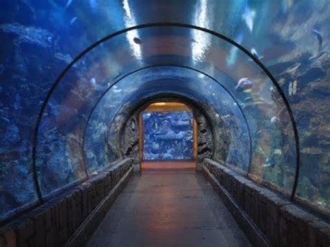 Shark Reef Aquarium  Mandalay Bay Youtube