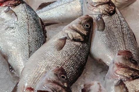 cuisiner poisson congelé décongeler le poisson en 10 minutes guide astuces