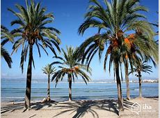 Palma de Mallorca rentals for your vacations with IHA direct
