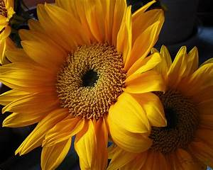 Bold Golden Yellow And Orange Sunflower Bouquet Photograph ...