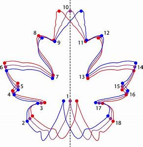Virus Structure And Symmetry Wiring Diagram