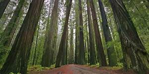 Redwood Poaching Causes California Parks To Close | HuffPost