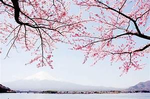 sakura japan tumblr - Tìm với Google | Sakura | Pinterest