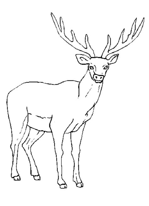 Coloring Pictures by Rocky Mountain Elk Coloring Page Coloring Home