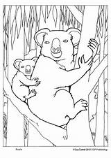 Koala Coloring Pages Colouring Animals Australian Sheets Animal Australia Bear Koalas Adult Printable Aboriginal Bears Books Close Drawings Lovely Educationalcoloringpages sketch template