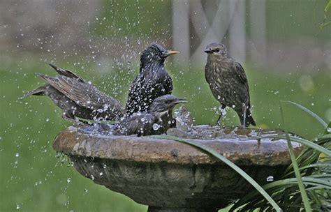 splish splash why do birds take baths cool green science