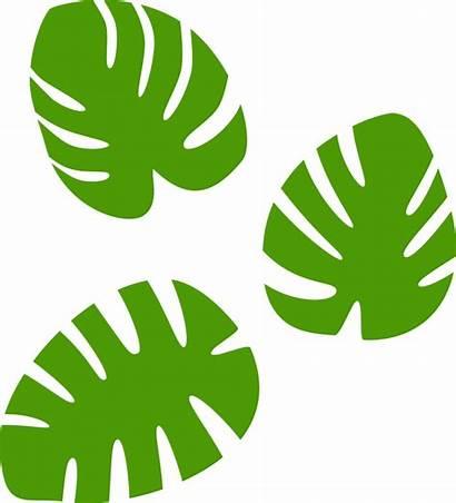 Monstera Leaf Leaves Svg Clipart Transparent Clip
