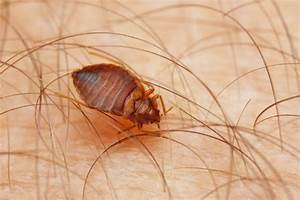 what are the common causes of bed bugs infestation With common bed bugs