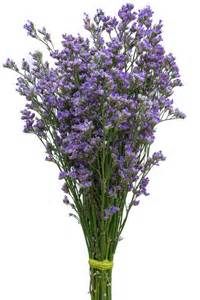 baby s breath wholesale blue limonium