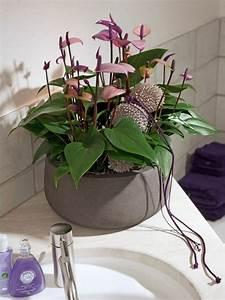 Zimmerpflanze Für Badezimmer : zimmerpflanzen f r das perfekte ambiente im haus ~ Sanjose-hotels-ca.com Haus und Dekorationen