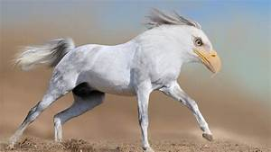 26 Photoshopped Animal Hybrids That Are Straight Out Of A ...
