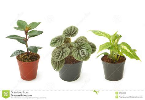 pots pour plantes d interieur plantes d int 233 rieur vertes assorties dans des pots photo stock image 47665556