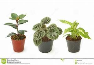 Plantes Vertes D Intérieur Photos : plantes d 39 int rieur vertes assorties dans des pots photo stock image 47665556 ~ Preciouscoupons.com Idées de Décoration