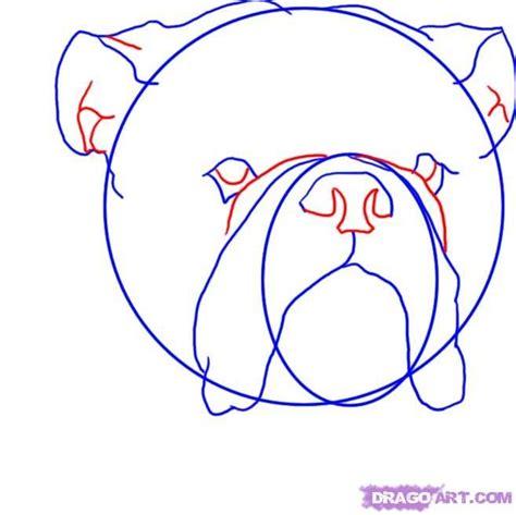 draw  english bulldog step  drawing dogs