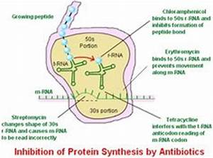 Drug Actions: Inhibiton of nucleic acid, inhibition of ...