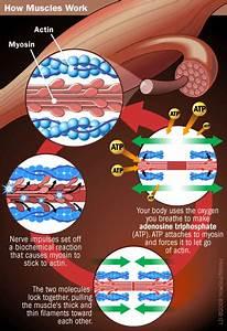 What Causes Rigor Mortis