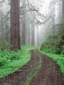 Rain Forest rain nature trees forest animated path gif ...