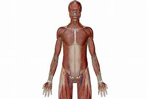 Anatomy And Physiology  Anatomical Position And